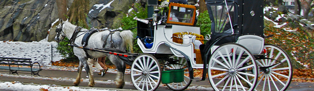 Equine and Horse Drawn Vehicles